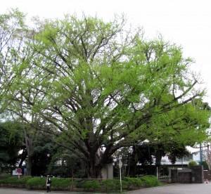 My Favorite Tree