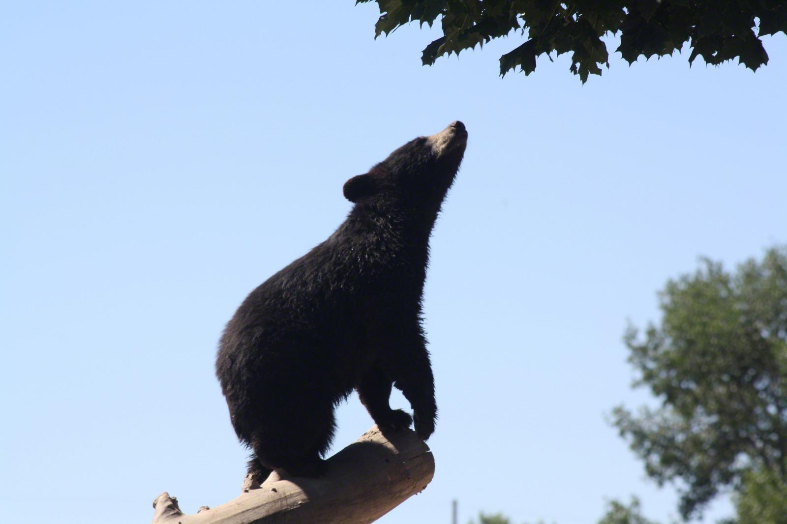 bear-cub-769504-print